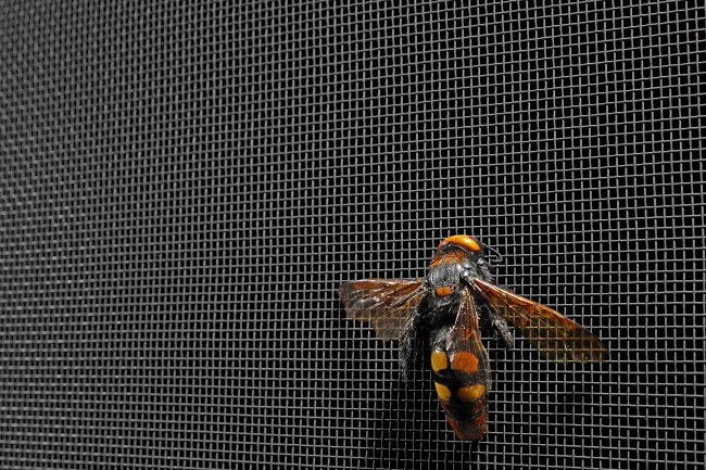Keep Wasps Away with Better Window Screens