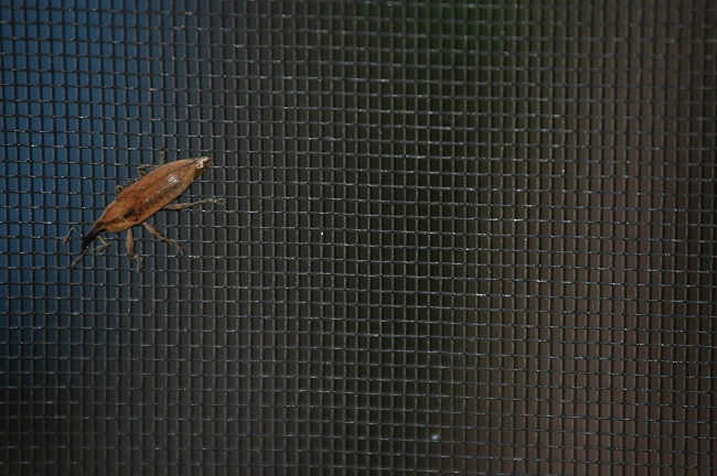 3 Signs That Show You Need to Replace Your Bug/Insect Screens